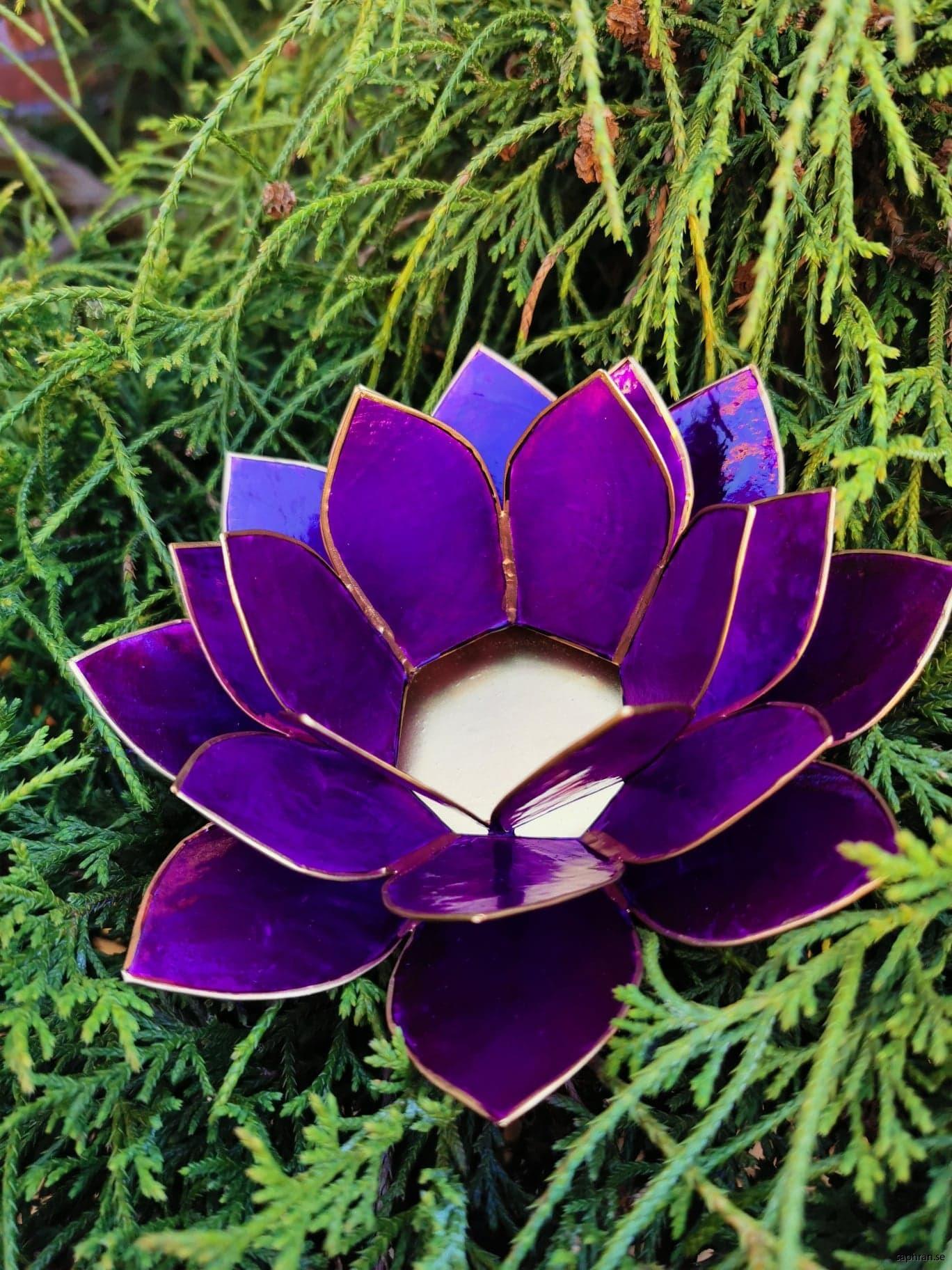 Stor Lotuslykta lila