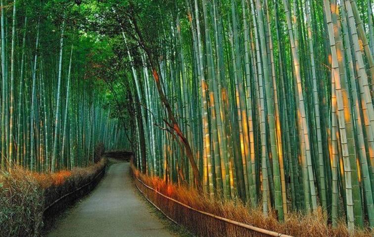 Bambulundar