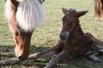 Dufa med ny födda Kria 2007