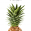 Pineapple 04 - Posterperfect