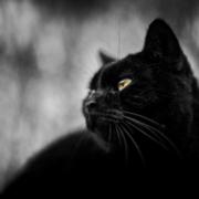 På jakt - Posterperfect featuring Stefan Christophs