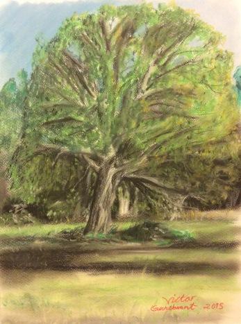 Trädet på ängen, torrpastell. 30 x 40 cm. Såld.