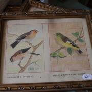 Handkolorerade franska fågelmotiv