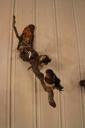 Uppstoppade fåglar