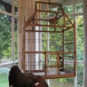 Stor fågelbur