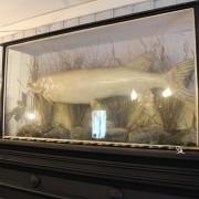Diorama med gädda