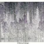 Vinter (2)