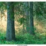 I storskogen