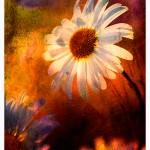 Flower Art (2)