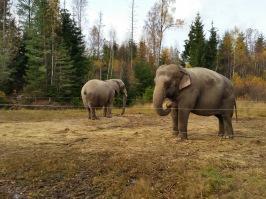 Dessa djur har flyttat från Älvsered