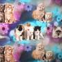 Ekologisk Bomullstrikå Välj varianter - Katter