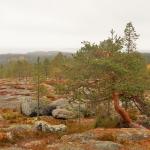 Högberget Jävre Solanderleden