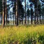 Solanderleden Kallax naturreservat