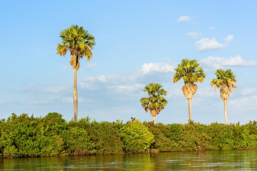 Landskapet längs Rufiji river.