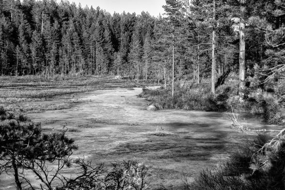 En bild över själva våtmarken