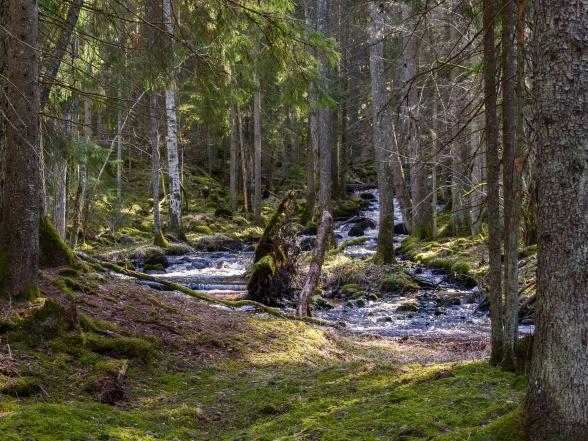 John Bauer-skog