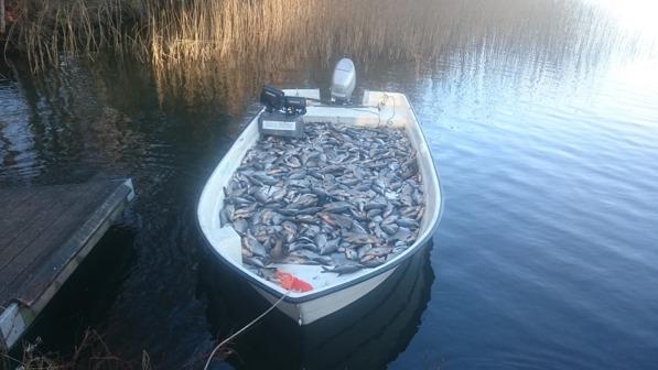 Notdrag 2600 kg + i Södra Bergundasjön varav 99% braxen