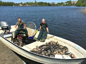 Bottengarn i Växjösjön 790 kg 11e maj 2016 Klara Vatten