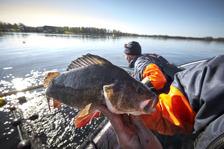 Rovfisk som abborre och gädda gynnas av klarare vatten och vegetation. Foto: Hans Runesson