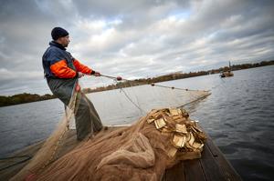 Notfiske Växjösjön 2016