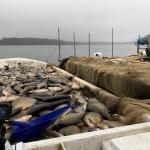 S.Berundasjön 13 ton 2019-1