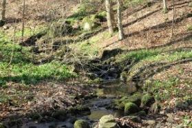 Ramslök vill ha det fuktigt om höst och vår och växer gärna i närheten av rinnande vatten.