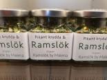 Pikant krydda & Ramslök