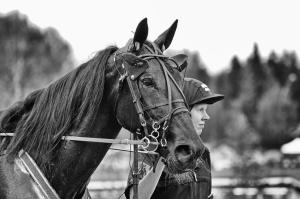 Travhäst på solvalla 1/4-2017 ©Sabina Larsson, LSphoto
