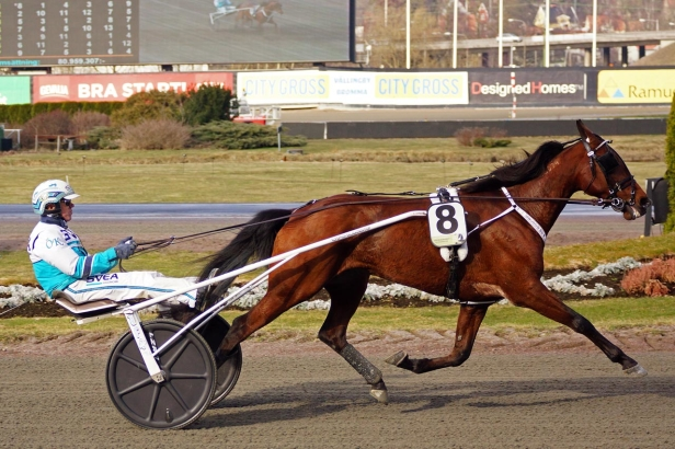 Delicious US, Solvalla 1/4-2017