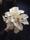 Calla brudbukett i vitt, runbunden, klassiskt vacker.
