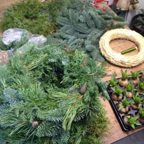 Kranslindning med mixat vintergrönt, en (sticksigt med vackert), mossa. Sen är det även hyacinter som ska få grön mossa om sin lök.
