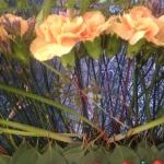 Detaljbild på en återvinningsbar blomstrande solfjäder