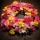 BegravningsKrans i färgstarka vårblommor