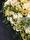 Blomsterhjärta till begravning i lime och cream