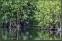 Längst bort i dammens hörn flög de ofta in bland buskarna