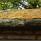 Taket på grillhyddan hyser en hel liten värld av vackra växter