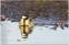 1 januari. Talgoxe börjar året med en rejäl tvätt av fjädrarna