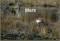 30 mars. Ett tranpar har tagit plats i en av dammarna