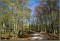 Ett av mina favoritavsnitt utmed slingan - avenbokskogen