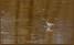 ..många olika vadare går där också - här en skogssnäppa