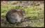 Möte med en liten kanin avslutade Dragsöpromenaden