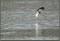 Gjusen fiskar i ösregnent