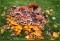 Konstverk i Hogland Park. En stubbe har blivit hem till en mängd svampar. Fantastisk syn!!!
