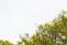 En överraskning att se en fladdermus ovan trädtopparna