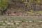 I år har davidshjortarnas skara utökats med 14 kalvar. Rekord i födsel (hittills).
