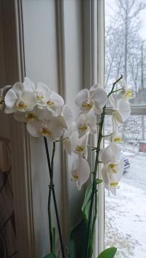 170116 fin vinterblomma :)
