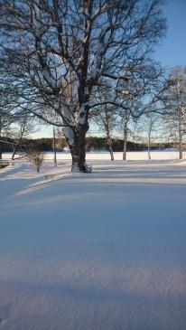 5.1  Blev det en riktig vinterbild från fönstret :)