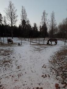 Natten till torsdag kom det lite snö :)