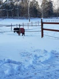 200228 Lena i snön