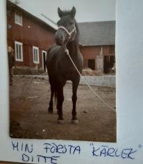 DITTE, min sköthäst iklädd mitt livs första GRIMMA :). Inköpt på Fölet i gamlastan och jag hade sparat ihop själv !